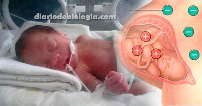 Rh negativo na gravidez: por que a gestante precisa de vacina? É grave?