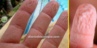 Por que os dedos enrugam na água? Explicação evolutiva e fisiológica