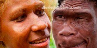 """Evolução humana: como era """"a cara"""" dos nossos ancestrais?"""