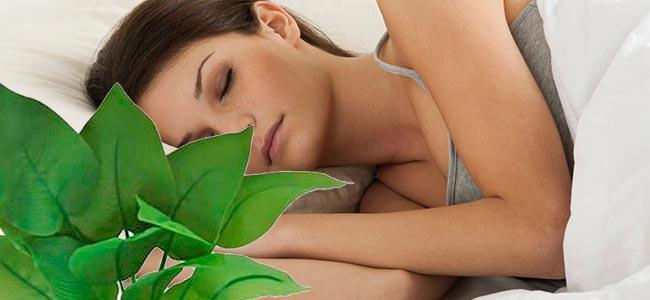 Dormir com plantas no quarto faz mal? Causa falta de ar?