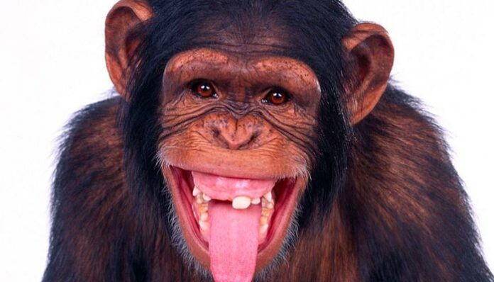 Um espermatozoide humano fecundar o óvulo de outro primata