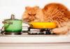 Animais que você pode comer e não sabia: rato, pombo, barata e mais 10 outros