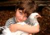 Pixilinga: Como acabar com piolho de galinha ou de pombo