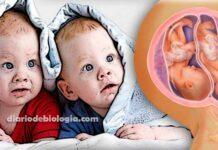 Como engravidar de gêmeos? Dicas baseadas em estudos científicos