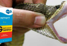 O Captopril, medicamento para hipertensão, é feito de veneno de cobra