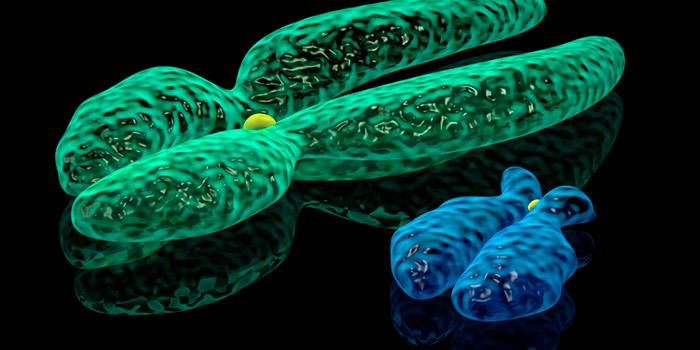 Geneticistas afirmam que o cromossomo Y não é um mero definidor de sexo - Diário de Biologia