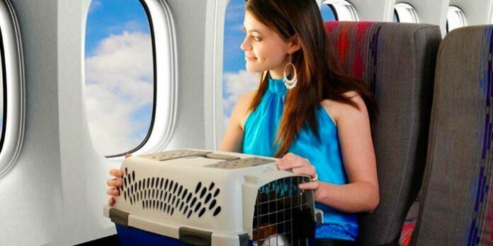 Como viajar para o exterior com seu cachorro ou gato