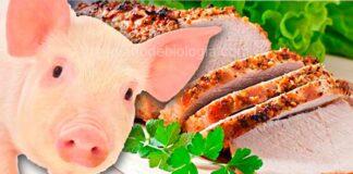 A verdade sobre a carne de porco: ela faz mal? Engorda? Aumenta o colesterol?