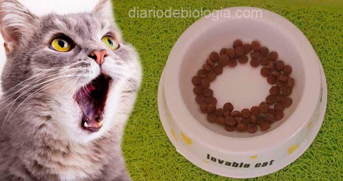 Por que meu gato não come toda ração? Veterinário responde