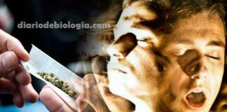 Maconha pode causar esquizofrenia em adolescentes