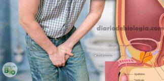 Dor ao urinar: doenças nos homens que causam dor durante o xixi