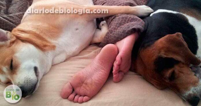 Pesquisa revela: dormir com cachorros faz mal para a saúde
