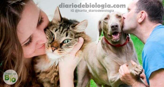 Facebook realiza pesquisa com 160 mil donos de gatos e cachorros e mostra o real perfil de cada um