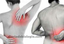Dor nas costas: 5 causas, baseadas em estudos, que não são doenças