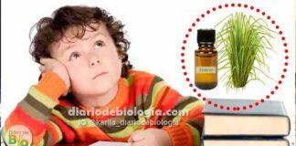 Esse óleo essencial pode melhorar os sintomas de TDAH (déficit de atenção) em crianças e jovens, dizem estudos