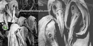 Os assustadores médicos da Peste Negra (Peste Bulbônica)
