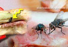 Como acabar com moscas na cozinha? Melhores remédios caseiros