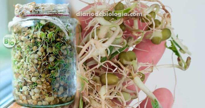 Germinação: Como germinar sementes para comer em casa