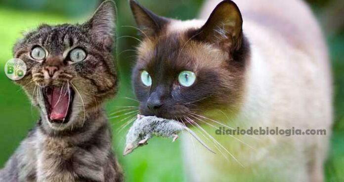 O que aconteceria se todos os gatos do mundo desaparecessem