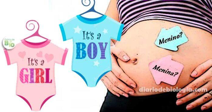 Menino ou menina? A gravidez de menino ou menina é diferente