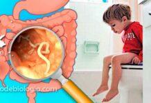 Sintomas de verme: O que você vai sentir se tiver vermes intestinais