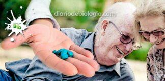 Diabetes e Viagra: Quem tem diabetes pode tomar Viagra?
