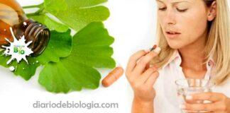 Benefícios do Ginkgo biloba: Porque você deve tomar o suplemento, baseado em estudos