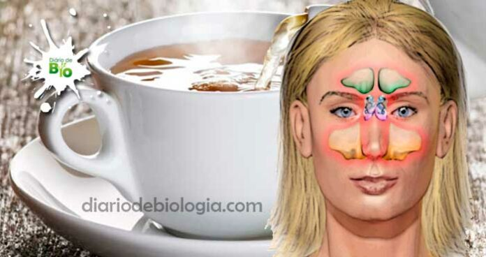 Chá para sinusite: aprenda 2 chás e suplementos vitamínicos