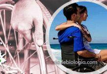 homem paraplégico tem ereção