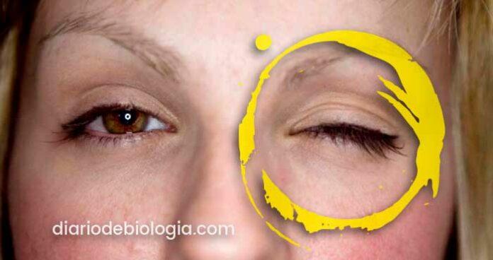 Olho esquerdo tremendo: tudo o que você precisa saber sobre tremor nos olhos
